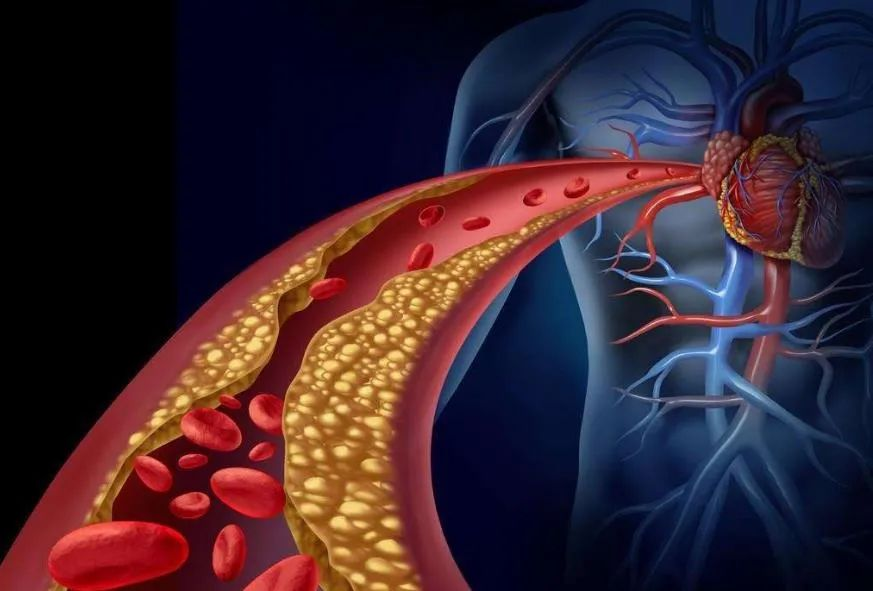 心脑血管系统